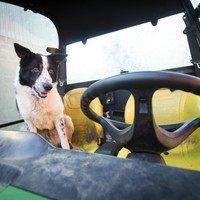 This dog drove a tractor and stopped traffic today (seriously)