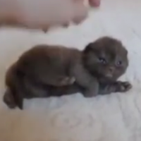 This video of a tiny kitten being petted is 33 seconds of unbelievable cuteness