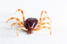 Heading to the country? Keep an eye out for disease-spreading ticks