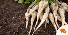 Plucky Parsnips: How to grow this versatile crop (plus other tips for May)