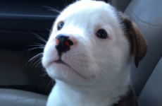 Oh nothing, just a tiny puppy being scared of his own hiccups