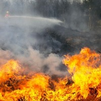 11 people have been prosecuted for starting wildfires in recent years