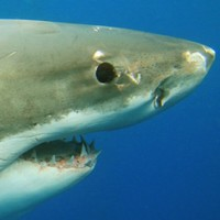 Man escapes shark attack by 'poking it in the eye'