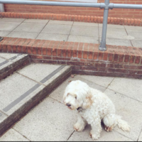 People in the UK are bringing their dogs to vote - and Twitter is going crazy for it