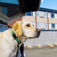 New sniffer dogs for Irish jails as gang leaders continue to profit from drugs behind bars