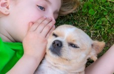 Children are more likely to turn to their pets than siblings during tough times