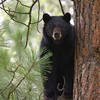 'Don't chase bears while drunk and holding a hatchet', warn police