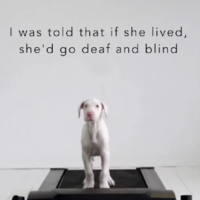 This guy didn't know how long his sickly puppy would live, so he filmed her growing up