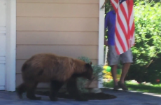 A man had a run-in with a bear... but it didn't end like you'd think