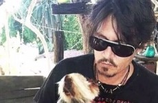 "Australia tells Johnny Depp his dogs have to 'bugger off"" back to the US today"