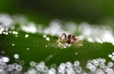 It rained tiny spiders in this Australian town