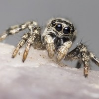 'I couldn't go out without getting spiders in my beard': The week in quotes