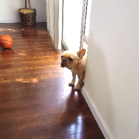 Watch this extremely guilty dog try to avoid an awkward situation