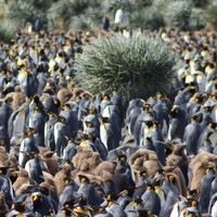 16 amazing photos from a penguinologist's lens