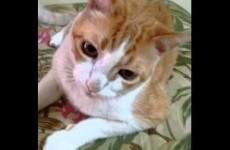 This cat singing If You're Happy And You Know It is delighting the internet