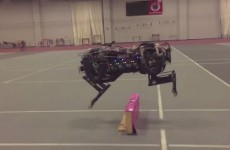 This four-legged robot can jump over walls without breaking its stride
