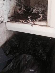 Cork rented house covered in dirt, rotten produce, faeces and maggots