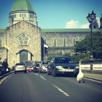 Oh, just a swan in Galway, acting like it owns the place