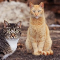 There's a campaign in Bray to 'protest the killing' of seven 'homeless' cats
