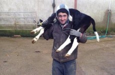 Forget Tinder - lonely Irish farmers are looking for love on Facebook