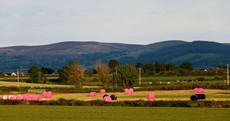 Here's why you may have spotted pink bales across Ireland this month