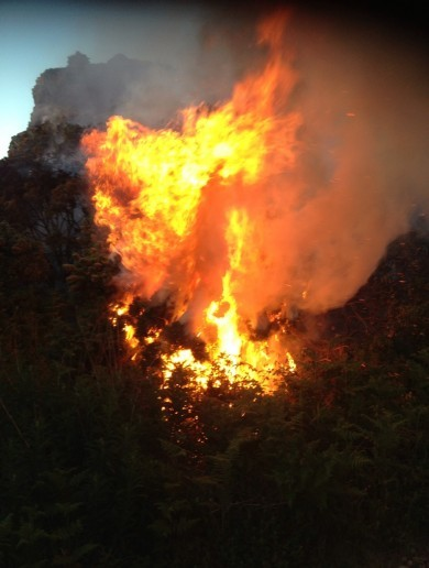 A simple mistake can cause massive gorse fires like this