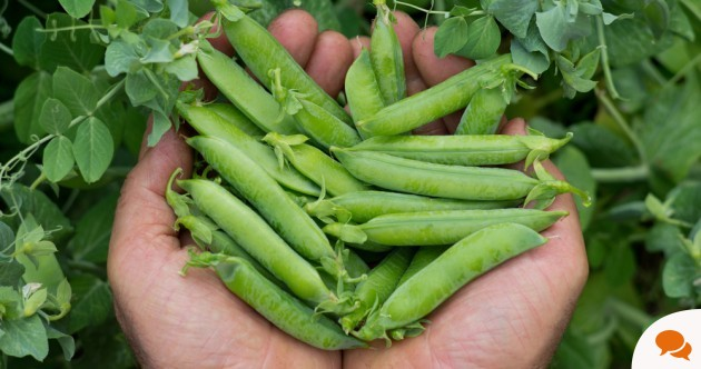 Growing your own food? Here's what to do in July...
