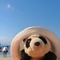 Hoy, the travelling panda, has been returned to his owner after a frantic search