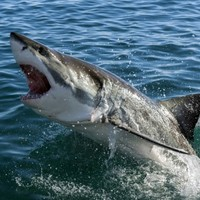 There's an unstoppable reason for the recent surge in shark attacks