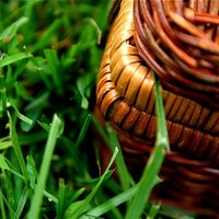 6 tips for the perfect picnic - from planning to cleanup and everything in between