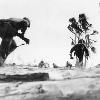 Bodies of 36 US Marines found 70 years after they died