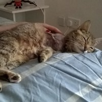 Can you help? This cat was shot with a pellet gun and is up for adoption