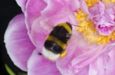 Bees are disappearing - and scientists are warning about worrying knock-on problems