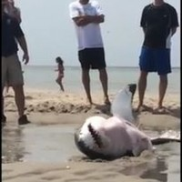 A shark gets stuck on a beach... and something heartwarming happens
