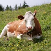 In focus: War of words over plan to ban 'raw milk'