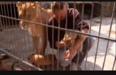 Man shares cage with lioness for five weeks