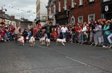 That controversial pig race went ahead in Arklow over the weekend