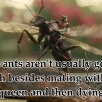 Here's why people are saying Ant-Man is sexist... towards insects
