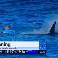 'Thanks for not eating me': Shark survivor surfer hails 'warrior' mate who came to his rescue