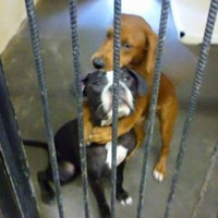 Hugging photo saves dogs from being put down