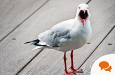 Seagulls are not monsters - let's stop the hysteria