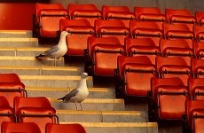 Seagulls have forced one football team to resort to dramatic measures