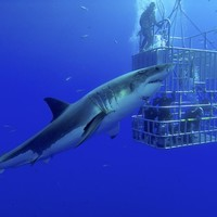 Here's what to do if you're ever attacked by a shark