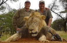 American dentist who 'paid $50,000 to kill a lion with a crossbow' wanted by police