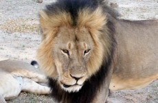 "Dentist who shot Cecil didn't know the lion was a ""known, local favourite"""