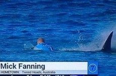 "A surfer has punched an attacking shark in ""a Mick Fanning replay"""