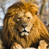 'A case of mistaken identity': Jericho the lion was NOT killed