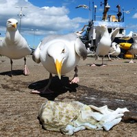 QUIZ: Did these seagull attack stories actually happen?