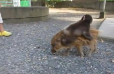 TAKE 5: Friday's obligatory funny animal clip