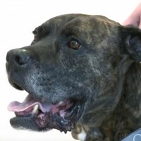 This dog went missing almost a decade ago... but now he's finally home again